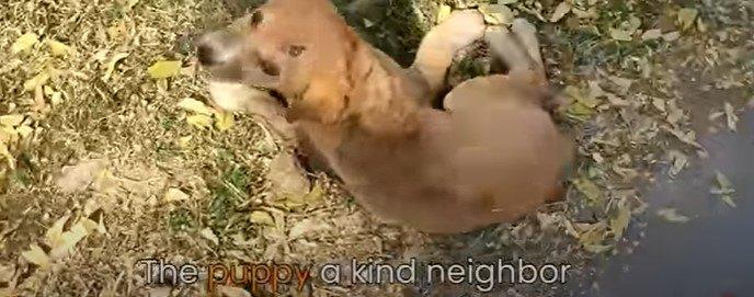 怪我をした子犬