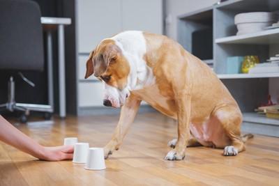 コップのおやつゲームをしている犬
