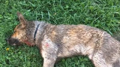 芝生に横たわる犬