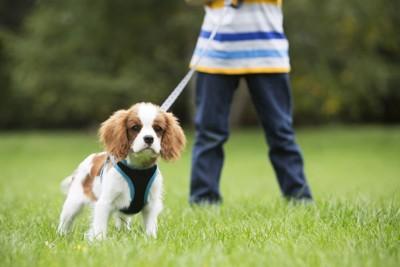 子供と散歩中の犬