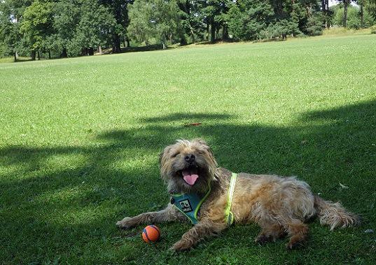 日陰で休む犬