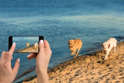 砂浜で撮影中の2頭の走る犬