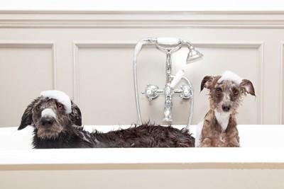 泡を乗せた2匹の犬