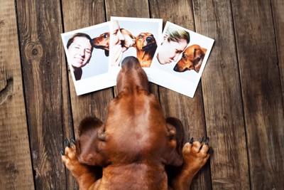 写真を眺める犬