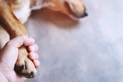 横たわる犬の前足を握る人の手