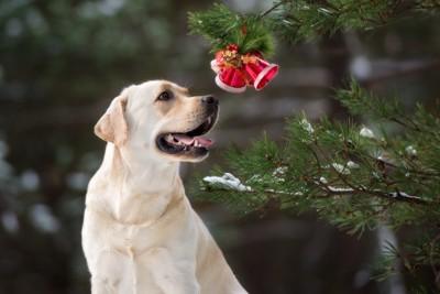 ベルを見つめる犬