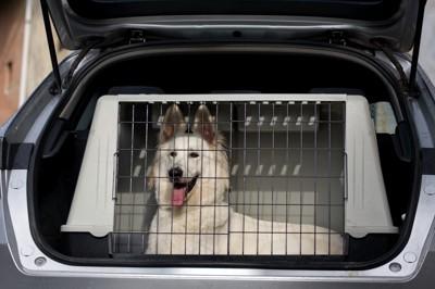 ケージに入って車に乗る犬2