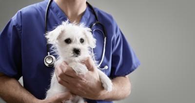 獣医師に抱かれている白い子犬