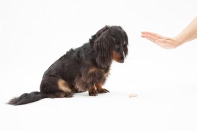 おやつを前にした犬に待てを指示する飼い主