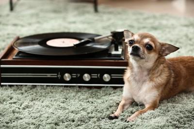 蓄音機の隣に座る犬