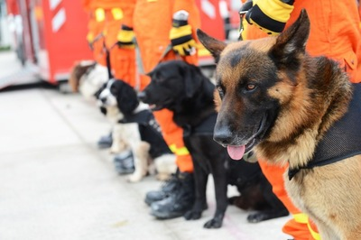 整列中の災害救助犬
