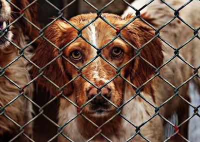 金網の犬2