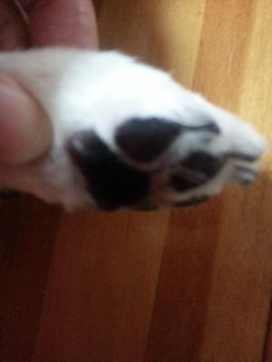 黒い爪の犬