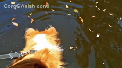 池を眺める犬