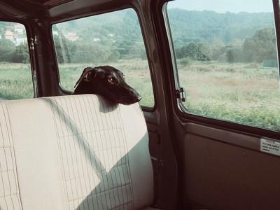 車内にいる犬