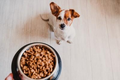 ご飯を犬に与えようとする手