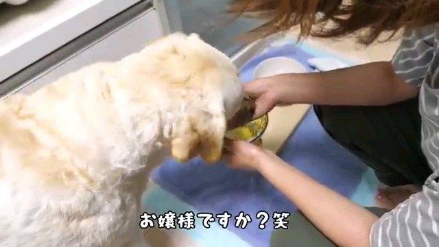 お嬢様~字幕