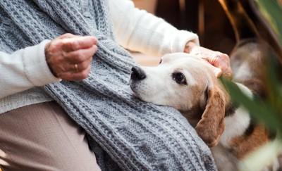 おばあさんの足に顎を乗せる犬