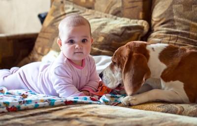 子犬と赤ちゃん