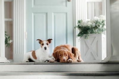玄関にいる2頭の犬