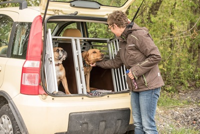 車に置かれたクレートに入る二匹の犬