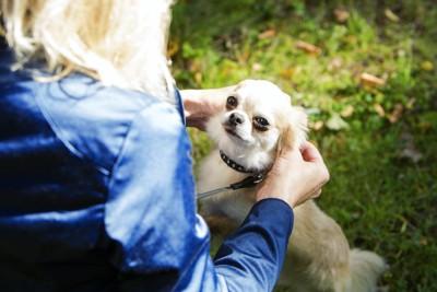 飼い主さんに撫でられてあまり喜んでいない犬