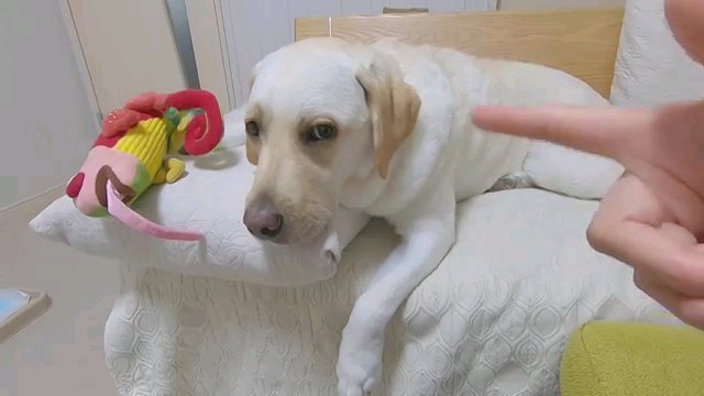人の指と犬