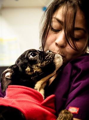 女性の顔にキスする犬