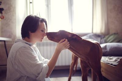 落ち込む女性に近付く犬