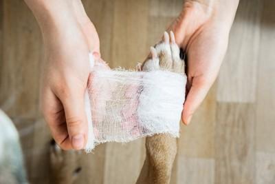 包帯を巻かれる犬の手