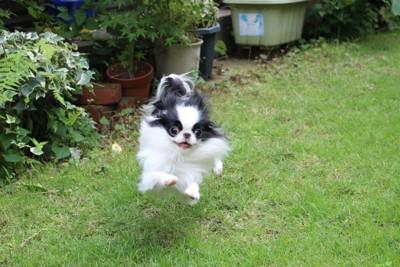 お庭で走り回る犬