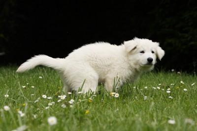 草原でうんちする犬