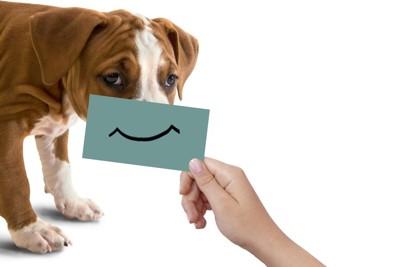 犬とカード
