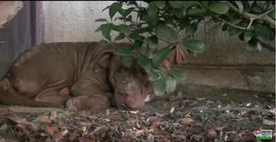 庭の隅に隠れる犬