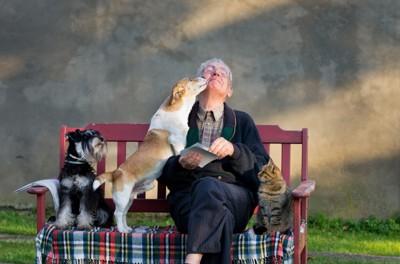 ベンチに座っている男性の顔を舐める犬