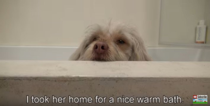 風呂でリラックスする犬