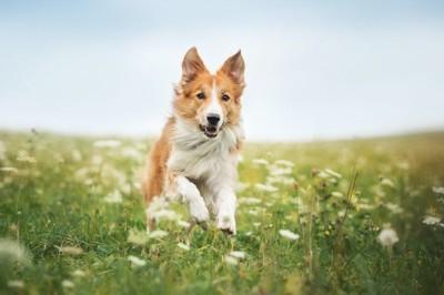 草むらを元気よく走る犬