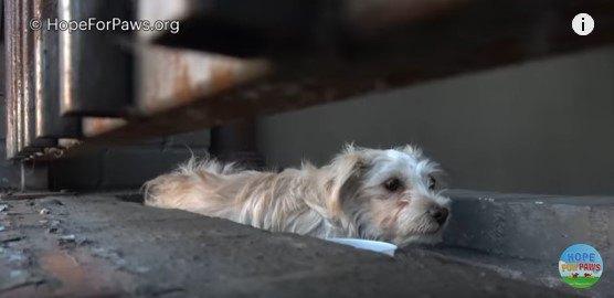 柵の内側に身を寄せる犬