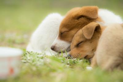 眠る2頭の犬