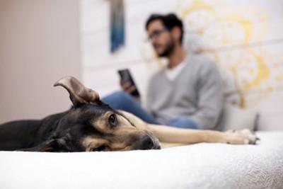 スマホを使う男性と退屈そうな犬