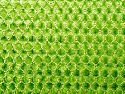 緑のスポンジ