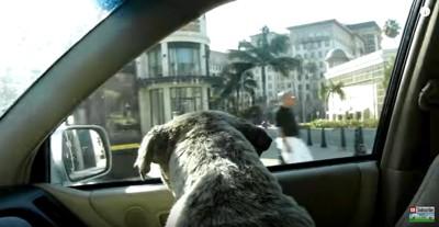 車窓から街を見る犬