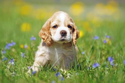 草原の上に佇む子犬