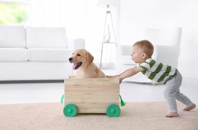 箱に入った犬と押す子供