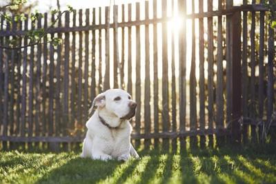 庭でくつろぐ犬
