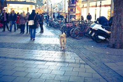 街中を歩く犬の写真