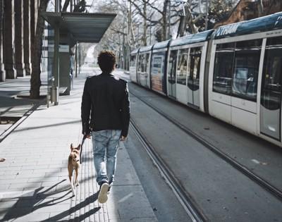 街を歩く犬と男性の後ろ姿