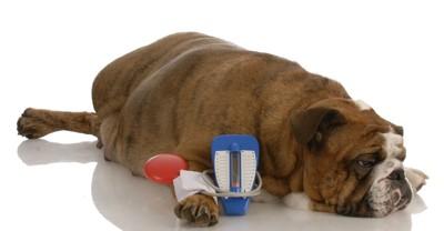 血圧を測る犬