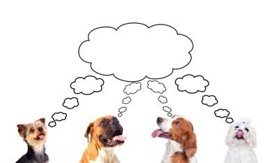考える4匹の犬
