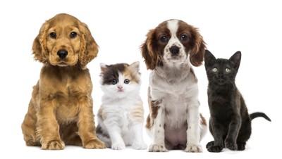 4匹の子犬と子猫